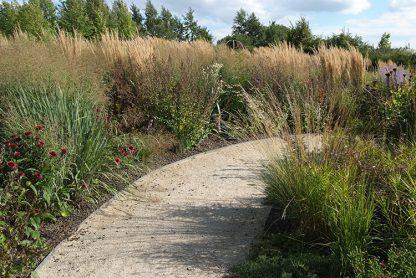 Ecolat-Gray-22-Path-nature