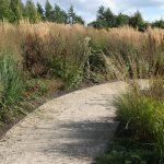 Ecolat Gray (22) Path (nature)